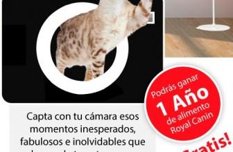 1 año de comida para gato gratis