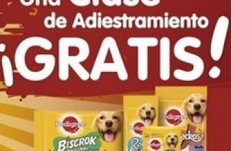 Clase de adiestramiento canino gratis